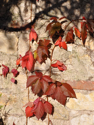 Leaves, France