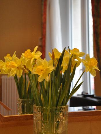 Daffodils, Paris