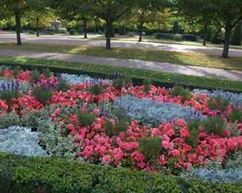 Regent's-Park-Flowers