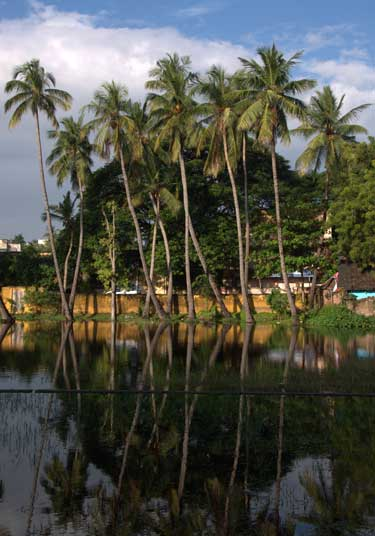 Palm-trees-and-reflections